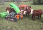 Entretien parc à vaches avec Robot Broyeur sur chenilles en Haute-Savoie - Entretien des parcs à vaches avec Robot Broyeur sur chenilles