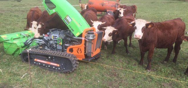 Entretien des parcs à vaches avec Robot Broyeur sur chenilles