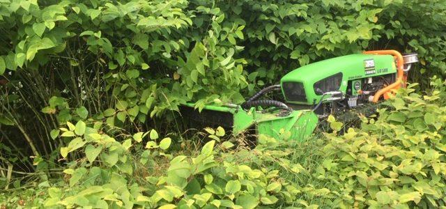 Entretien des espaces verts le long de l'Arve entre Cluses et Sallanches